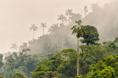 Cloud forest. In Monte, Ecuador stock photography