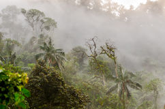 Cloud forest Royalty Free Stock Images