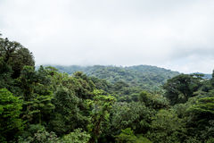 The cloud forest in Monteverde Stock Photography