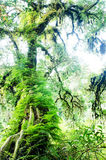 Cloud forest or mossy forest Royalty Free Stock Photography