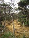 Cloud forest mount kinabalu borneo Stock Photo