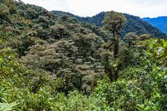 The cloud forest. A natural sanctuary north-west of Quito Royalty Free Stock Photography