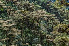 The cloud forest. A natural sanctuary north-west of Quito Stock Images