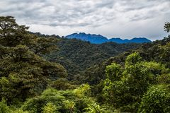 The cloud forest. A natural sanctuary north-west of Quito Stock Image