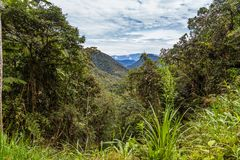 The cloud forest. A natural sanctuary north-west of Quito Royalty Free Stock Photos