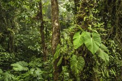 Cloud Forest Royalty Free Stock Photography