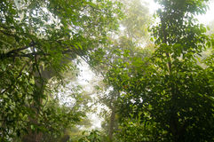 Cloud forest top Stock Image