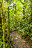 Cloud Forest Trail Stock Photos