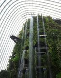Cloud Forest Water Fall Royalty Free Stock Photo