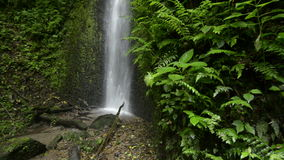 Cloud forest waterfall. Detail, Volcan Baru national park, Panama, Central America stock video
