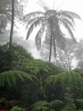 Cloud forests with many ferns Cyanthales Royalty Free Stock Photos