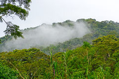 Cloud Forests in the Mountains Royalty Free Stock Image