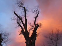 Cloud Glow at Sunset with Tree Silhouettes Stock Photos