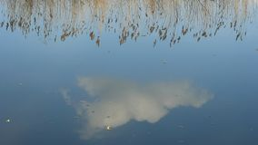 Cloud and grass. Are reflected in a river stock video footage