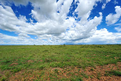 Cloud and grassland Royalty Free Stock Photos