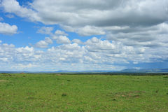 Cloud and grassland. S in Kenya Africa Royalty Free Stock Image