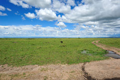 Cloud and grassland Stock Photos
