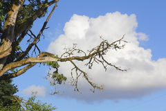 Cloud Hanging on a Branch Stock Photography