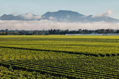 Cloud inversion above vineyards in Marlborough. New Zealand royalty free stock photos