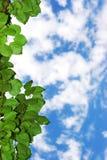 cloud liście zdjęcie royalty free