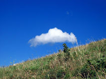 Cloud and meadow. White cloud on meadow with deep blue sky royalty free stock photos