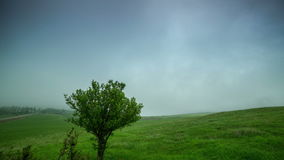Cloud mist covers a green field with a lone tree in Kazakhstan - 4K Timelapse stock video