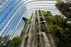 Cloud Mountain in Cloud Forest Dome Royalty Free Stock Photos