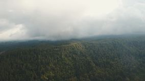 Rainforest in cloud, Bali,Indonesia. Cloud over green forests. Aerial view of over tropical rainforest in mountains with white fog, clouds, Bali,Indonesia. Fog stock footage