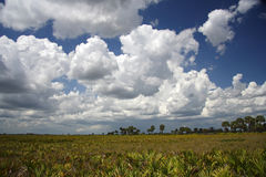 Cloud Over the Kissimmee Prairie Stock Images