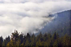 Cloud over spruce forest Stock Images