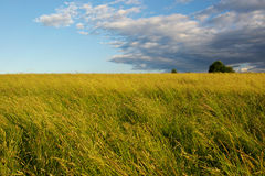 Cloud over summer meadow Royalty Free Stock Photography