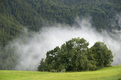 Cloud over trees on mountain Stock Images