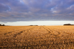 Cloud patterns and straw stubble Stock Image