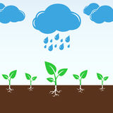 Cloud and rain drops falling on the green sprouts Royalty Free Stock Photos