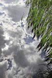 Cloud reflection on a paddy field Stock Photography