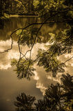 Cloud Reflections. The Summer sky is reflected in a still lake Royalty Free Stock Image