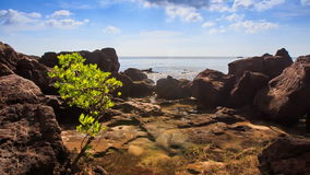 Cloud Shadow Moves above Rocks Small Tree on Beach. Cloud shadow moves above large rocks and small tree on beach against azure sea sky and clouds stock footage