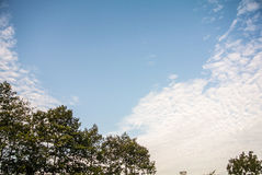 Cloud on the sky. Clouds on the sky in a beautiful evening Royalty Free Stock Photography