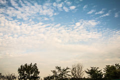 Cloud on the sky. Clouds on the sky in a beautiful evening Royalty Free Stock Photo
