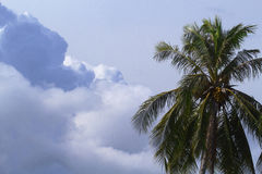 Cloud on sky and palm tree crown. Skyscape with big cloud photo. Royalty Free Stock Image