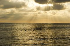 Cloud Sun Rays Ocean Birds Royalty Free Stock Photos