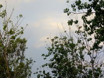 Cloud. Sunlight is coming out from the clouds, due to which the color of the clouds has turned yellow Stock Photo