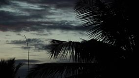 Cloud time lapse 4K coconut tree branch and leaves. Cloud time lapse 4K high speed coconut tree branch and leaves stock video footage