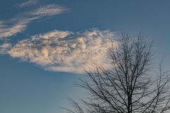 Cloud and tree. Cloud close to tree without leaves Royalty Free Stock Images