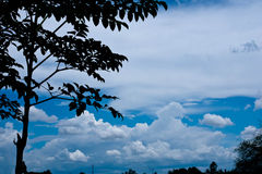 Cloud and tree. Tree silhouette over blue sky and cloud royalty free stock images