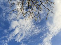 Cloud and twigs. In blue sky Stock Image