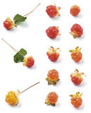 Cloudberries Stock Images