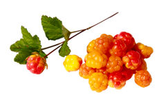 Cloudberries Royalty Free Stock Photos