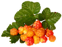 Cloudberries with leaves Royalty Free Stock Photos
