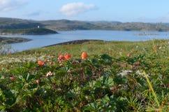Cloudberries tundra, τους λόφους και τη θάλασσα στοκ εικόνες με δικαίωμα ελεύθερης χρήσης